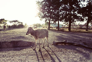 Africam Safari by aroche