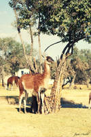Africam Safari 02 by aroche