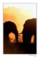 Elephant Bulls by pastinsanity