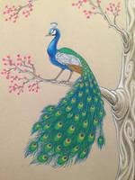 Peacock by celticsidhe