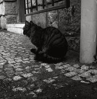 Silent Cat by Pitrisek