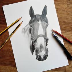 Horse (Commission) by portraitprints