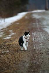 Observant Kitty. by pasofino6