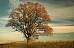 Autumn Tree by DavidCraigEllis