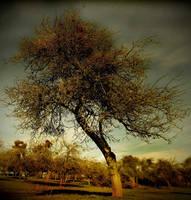 .: The Winter Tree :. by DavidCraigEllis