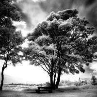 The Park II by DavidCraigEllis