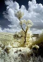 ONE TREE HILL by DavidCraigEllis