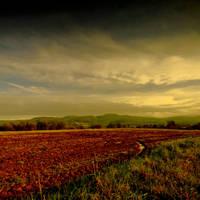 Evening Fields by DavidCraigEllis