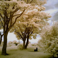 The Park Infrared - Redux by DavidCraigEllis