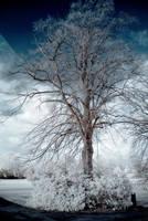 Winter Infrared III by DavidCraigEllis