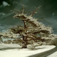A Secret Life Of Ghost Trees.. by DavidCraigEllis