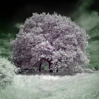 The Lilac Tree by DavidCraigEllis