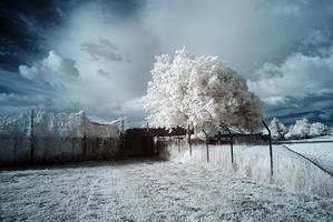 Bosbury Infrared by DavidCraigEllis