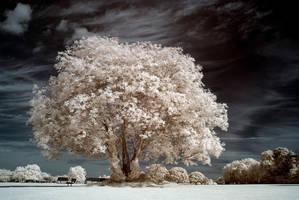 White Park by DavidCraigEllis