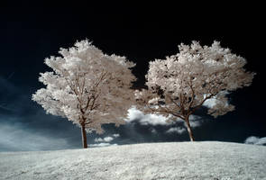 .: Siamese Dream :. by DavidCraigEllis