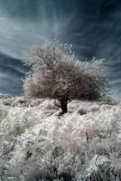 New Forest Infrared by DavidCraigEllis