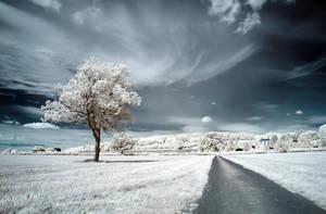 .: Dream Road :. by DavidCraigEllis