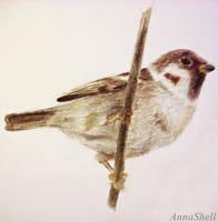 Sparrow by AnnaShell