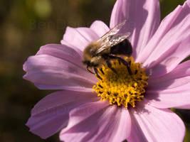 Pollinate by darwin2kx