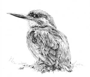 Kingfisher by Char10tte