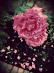Bloom by coldseptember