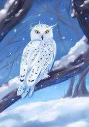 Snowy Owl by Mellodee