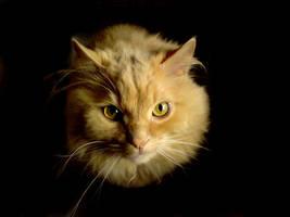 Cheshire Cat by Lorinha84