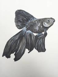 Goldfish by monafleur