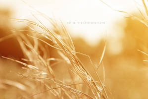 summer by opticalfocus