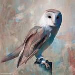 Barn Owl by TheRollingMan