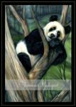 Panda Delight by Tammara