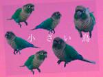 little bird by DancingDragon-Studio