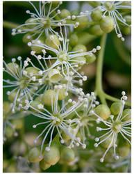 Flower Tops by feetpeet