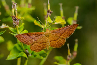 Butterfly by smotrov