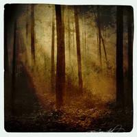 Pine Grove by rawimage
