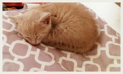 Sleep dear kitty.. by nikoskap