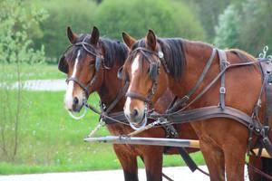 Horses by Nabucodorozor