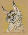 Bob cat by marimoreno