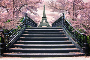 Paris in the spring by Tracy59