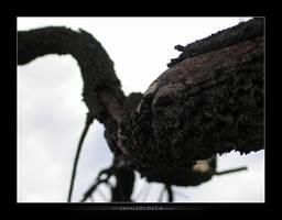 Eerie Tree by subaqua