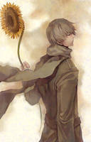 the sunflower by SHIBUE