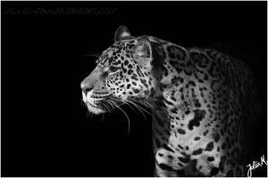 Wild Beauty by Velvet-Paw