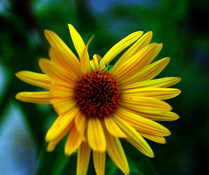 Yet Another Bleeping Sunflower by baruch60610