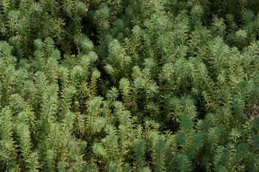 Faux Rain Forest by bobcraton