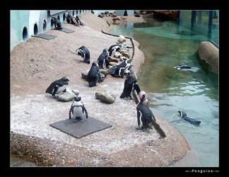Penguins by ManixTT