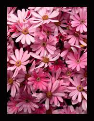 Flowers by lazylilfairy