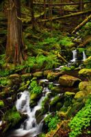 Clackamas River Trail by greglief