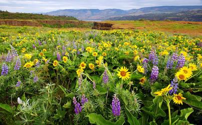 Rowena Plateau Wildflowers by greglief
