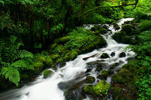 Wahkeena Creek by greglief