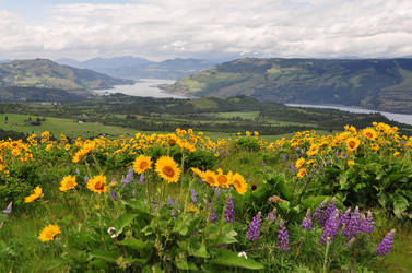 Looking West from McCall Point by greglief